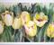 Батик «Желтые тюльпаны» 2011г.